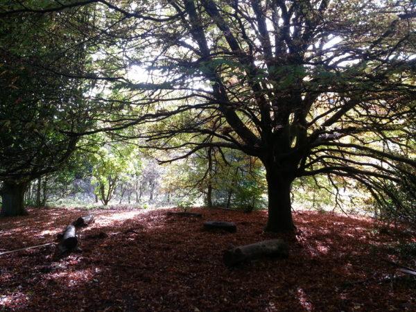 Stanmer Quiet woodland garden